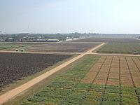 ICRISAT Field.jpg