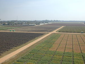 International Crops Research Institute for the Semi-Arid Tropics - Image: ICRISAT Field