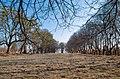 IMGP9435 поголений Підгорецький парк.jpg