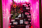 ISS-46 Zinnia flowers in the Veggie facility (3).jpg