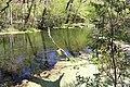 Ichetucknee River 3.jpg