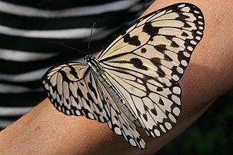 Monsanto Insectarium - Paper kite, Monsanto Insectarium