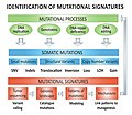 Identification Mutational Signatures v2.jpg