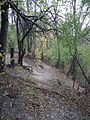 Illinois Prarie Path, Monkey Trail Path - panoramio.jpg