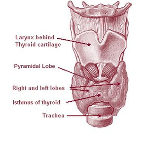 Thyroglossal duct