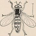 "Image from page 084 of ""Introduction to zoology; a guide to the study of animals, for the use of secondary schools;"" (1900) (14598311499).jpg"