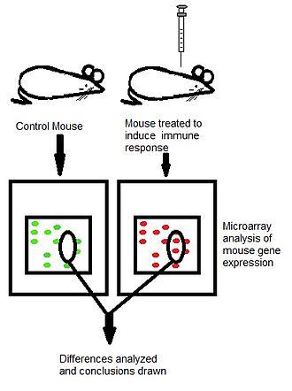 Immunoproteomics - Immunoproteomic mice example