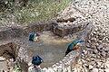 Impressions of Serengeti (19).jpg
