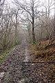In Saxonbury Wood - geograph.org.uk - 322242.jpg