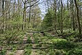 In ancient Temple Wood - geograph.org.uk - 407568.jpg