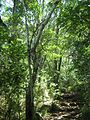 Indigenous afrotemperate forest at Newlands Cape Town 4.jpg