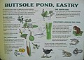 Information sign for Buttsole Pond - geograph.org.uk - 486390.jpg