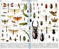 Insects in Brockhaus 1937.jpg