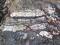 Interbedded graywacke-siltstone-slate (Mud Lake sequence, Neoarchean; Bourgin Road roadcut, Virginia, Minnesota, USA) 1 (23139267879).jpg