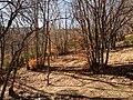 Invierno 2011 en Tejera negra - panoramio (9).jpg