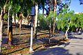 Irvine, CA, USA - panoramio (51).jpg