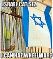 Israel Cat.jpg