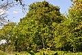 Ivanchytsi Rozyshchenskyi Volynska-Tilia cordata nature monument-general view-1.jpg