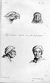 J.C. Lavater, L'Art de connaitre les hommes... Wellcome L0025310.jpg