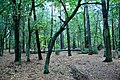 Jabłonna, Poland - panoramio - Roman Eugeniusz (3).jpg