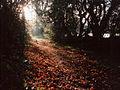 Jack Kane Woods - geograph.org.uk - 90174.jpg