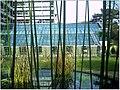 January Frost Botanic Garden Freiburg Bamboo - Master Botany Photography 2014 - panoramio (1).jpg