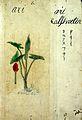 Japanese Herbal, 17th century Wellcome L0030043.jpg