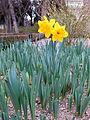 Jardín Botánico de Madrid en febrero- (16053238744).jpg