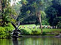 Jardín Botánico de Singapur 40.jpg