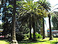 Jardín Casa Thiers.JPG
