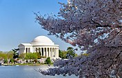 Jefferson Memorial with Cherry Blossom.jpg