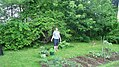 Jenny And Our Vegetable Garden (8429730598).jpg