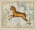 Johannes Hevelius - Lynx.jpg