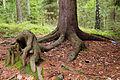 Jyväskylä - tree root 4.jpg