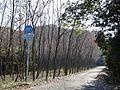 Kagoshima Pref Road 491 Kokubu-Kawauchi.JPG