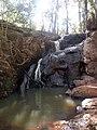 Karura Forest.jpg