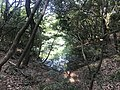 Kasuya Research Forest of Kyushu University 10.jpg