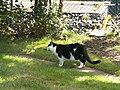 Katter (6061865445).jpg