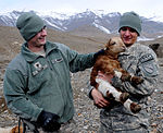 Kentucky ADT II begins Panjshir sheep parasite project DVIDS367642.jpg