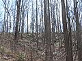 Kings Mountain National Military Park - South Carolina (8558893256) (2).jpg