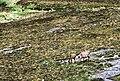 Kinloch Glen, Isle of Rum - geograph.org.uk - 86152.jpg