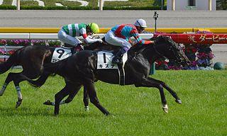 Kizuna (horse) Japanese-bred Thoroughbred racehorse