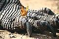 KomodoDragon Beauty&The Beast.jpg