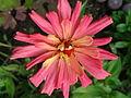 Kwiatek 75.jpg