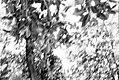LISBON - 20170318 - 28 (35619850966).jpg