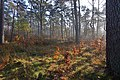 LSG Forst Rundshorn IMG 2308.jpg