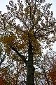 LSG Sudmerberg - Bäume (11).jpg