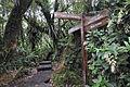 La forêt de Bélouve.jpg