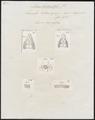 Lacerta savignye - kop, poten en schubben - 1700-1880 - Print - Iconographia Zoologica - Special Collections University of Amsterdam - UBA01 IZ12400113.tif