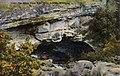 Lander WY - The Sinks, Popo Agie River (NBY 429903).jpg